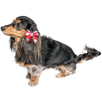 All Star Dogs Wisconsin Hair Bow