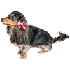 Image for All Star Dogs Wisconsin Hair Bow